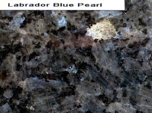 Labrador-Blue-Pearl